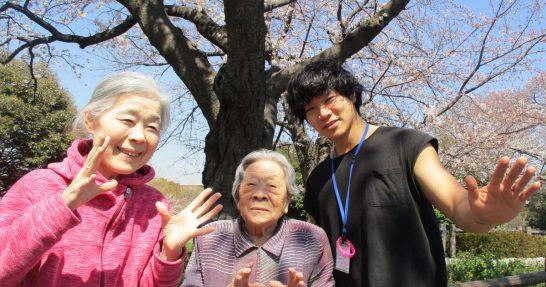 水元公園の桜と菖蒲